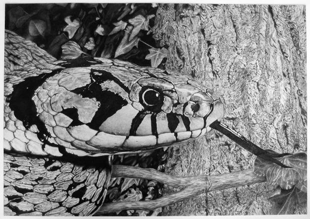 Schlange - Kreidezeichnung: nst